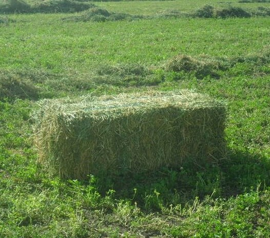 Lucerne hay small square bale for Straw bale house cost calculator