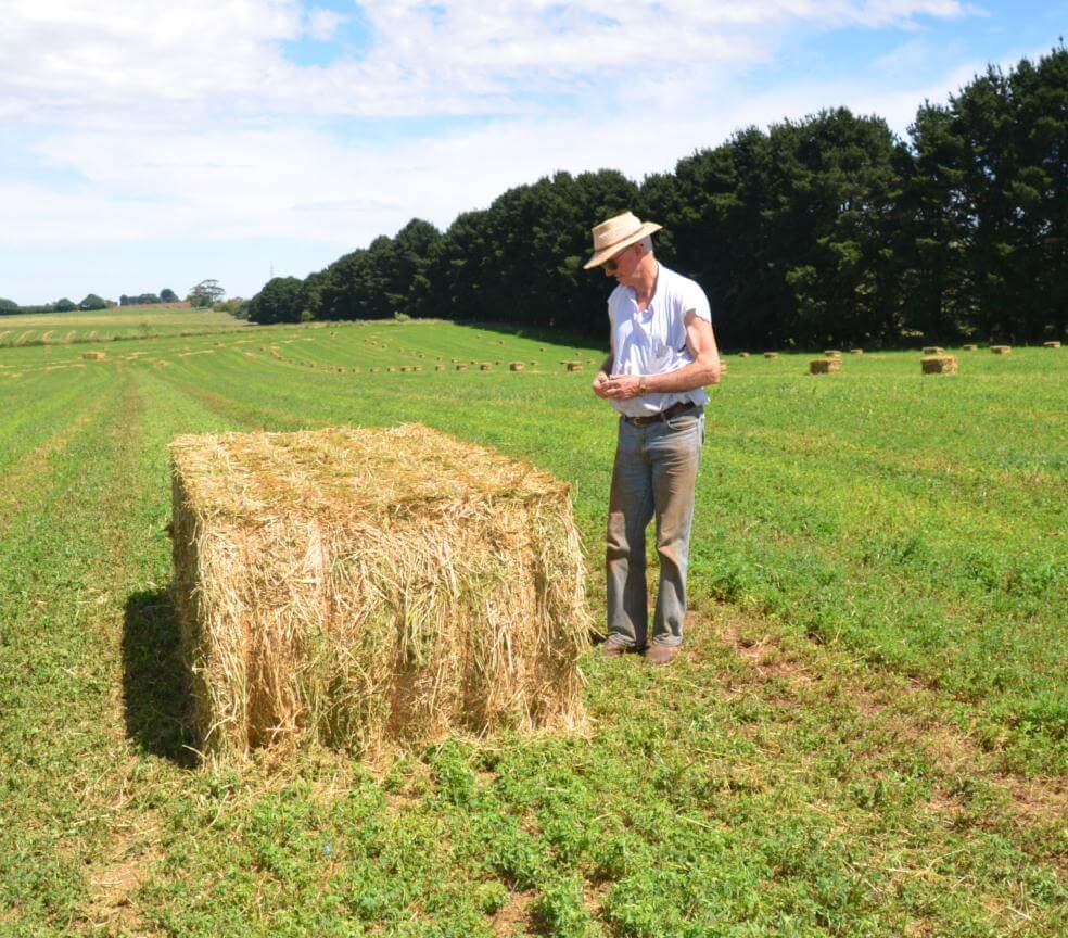 hay for sale - big square bale