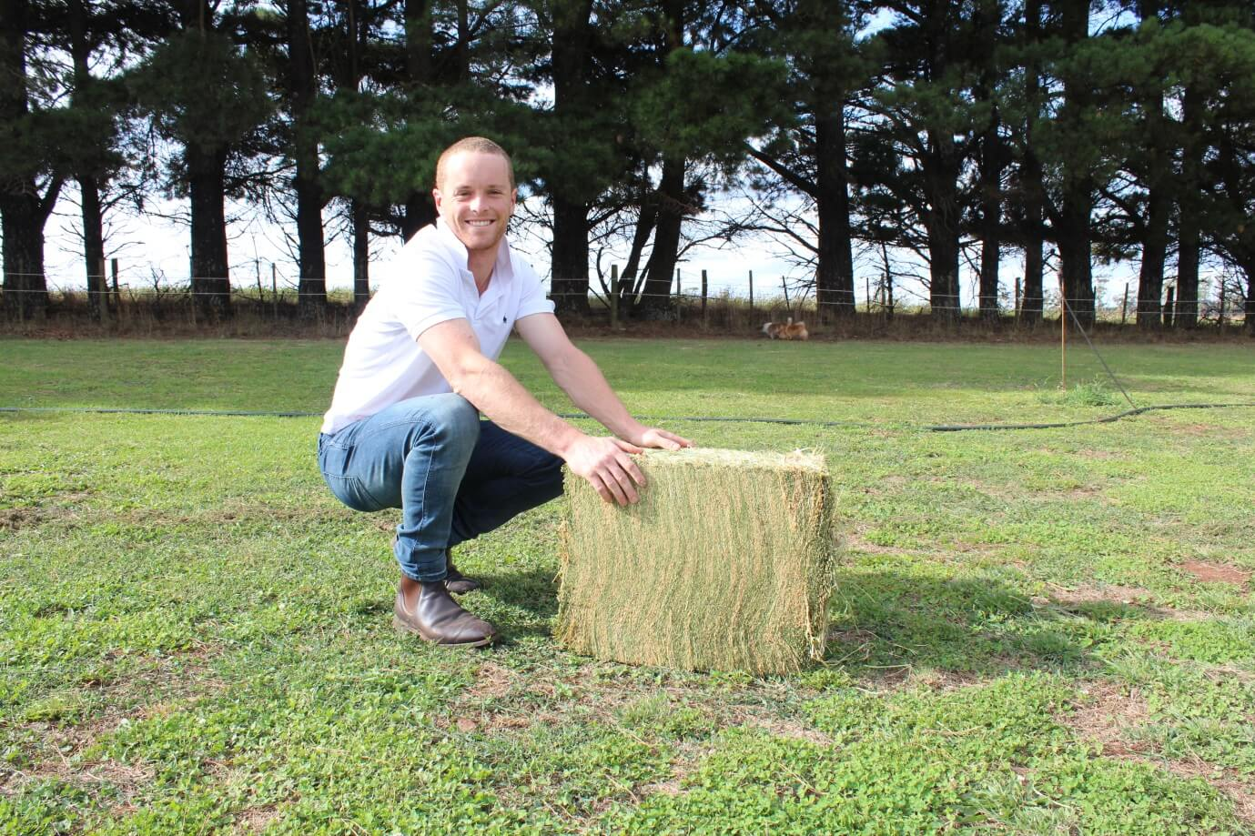 Lucerne Hay For Sale - Compact Bale
