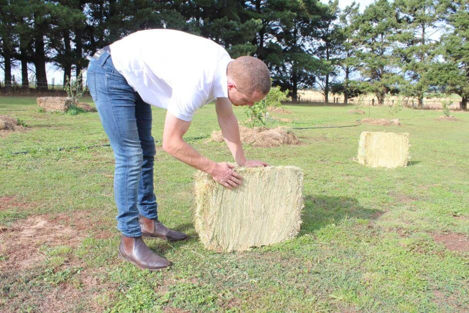 grass hay for sale - compact grass hay bale