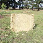 oaten hay for sale - compact oaten hay bale