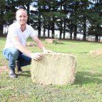 straw bale compact bale